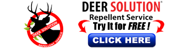 Deer Repellent Service - Protect your landscape from Deer Damage